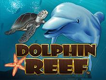 Dolphin Reef в клубе Вулкан